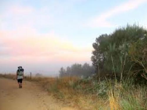 Lunghi tratti Cammino di Santiago a piedi